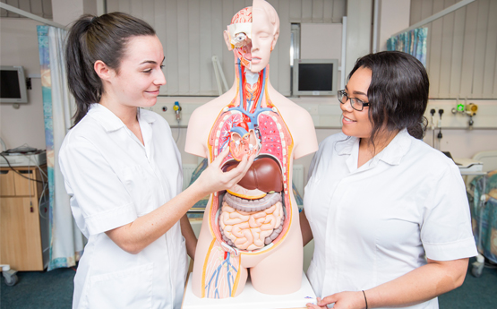 Two nursing students with a model of the human torso and organs